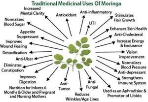 Moringa benefits moringa trees for sale moringa seeds