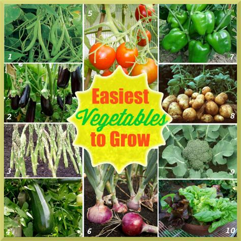 10 most easiest vegetables to grow in a home garden
