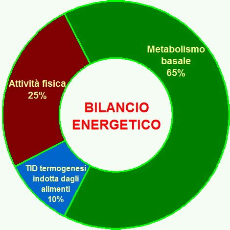 termogenesi alimentare consumo calorico cos 232 e come funziona noene italia