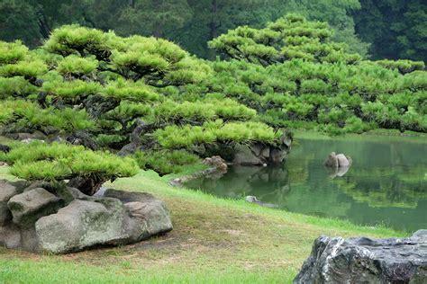 trees niwaki in japanese gardens retireediary