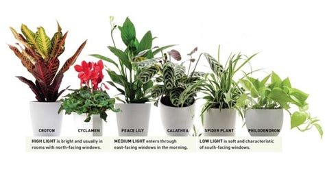 plants for windowless bathroom plants for windowless bathroom 28 images windowless