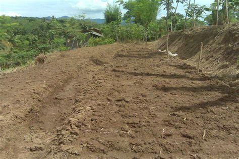 Pupuk Dolomit Untuk Durian cara mudah budidaya bawang merah di lahan kering sipendik