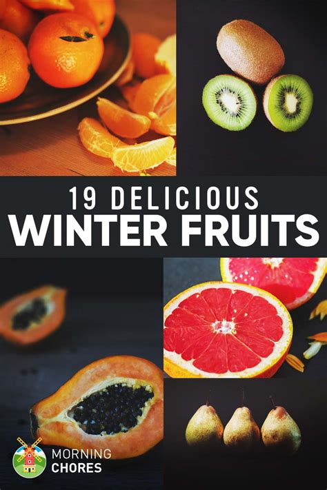 fruit you winter fruits list 19 delicious fruits you can eat grow