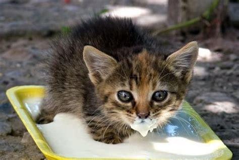 Big Weaning Bowl картинки милых котят 30 фото