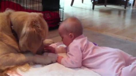 golden retriever with baby baby s tummy time w golden retriever