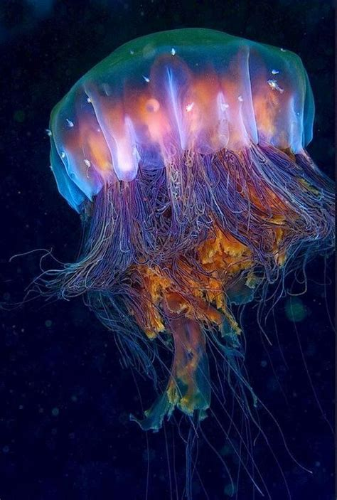 Jelly All Type what do jellyfish eat do brains and all types of it
