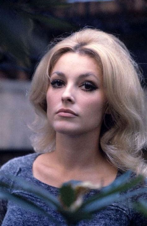 sharon tate sharon tate 24 femmes per second