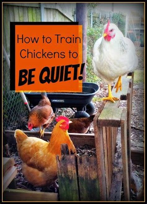 quiet chickens for backyards pinterest the world s catalog of ideas