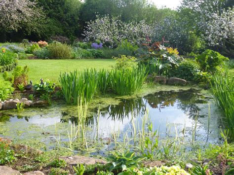cottage garden pond naomi s open garden event your events blogs