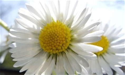 Was Machen Gegen Pilze Im Garten by Pflanzenbr 252 Hen Biologische Spritzmittel Gegen Sch 228 Dlinge