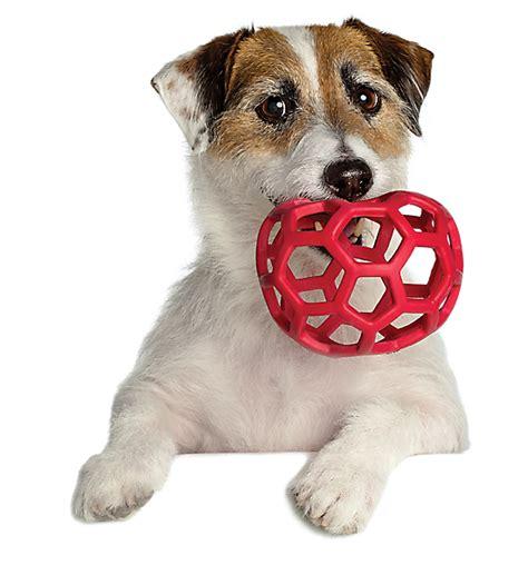 petsmart puppy playtime doggie day c day care petsmart