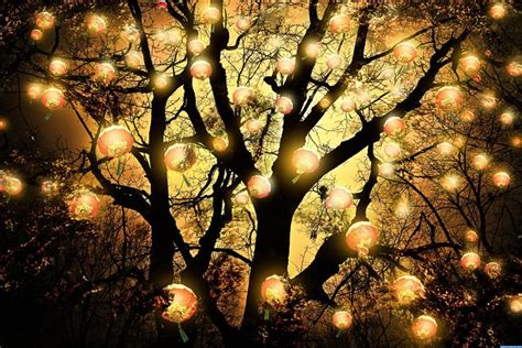 image gallery lantern tree