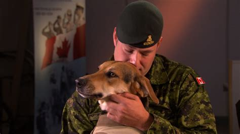 ptsd service dogs service dogs help canadians soldiers with ptsd