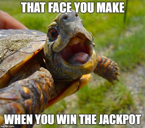 Turtle Meme - that face turtle imgflip