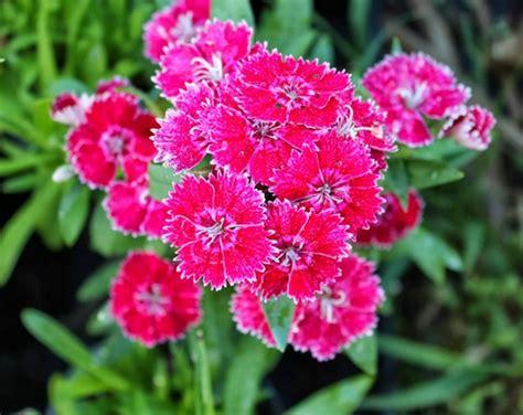 manfaat  fungsi tanaman hias  perlu diketahui