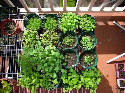 Starting A Garden From Seeds by Starting A Vegetable Garden Starting A Garden