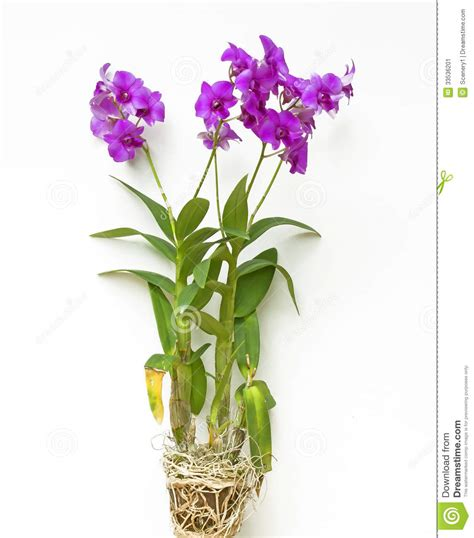 Vase Of Orchids by Orchids In Vase Pink Orchid Stock Image Image 33536201