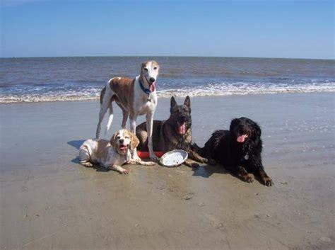 florida beaches that allow dogs park shore naples florida pet friendly condos on the realty times