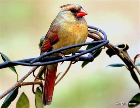 georgia birds in winter