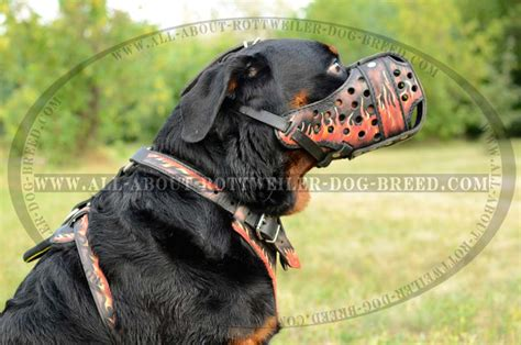 dogs similar to rottweiler big rottweiler attack dogs free photos