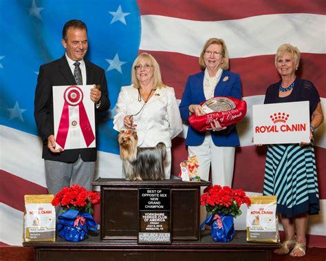yorkie club of america rori bos at terrier club of america 2016 topknot terriers