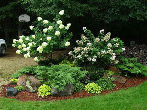 hydrangea front yard pin by susie matulevicz finan on landscaping plants i