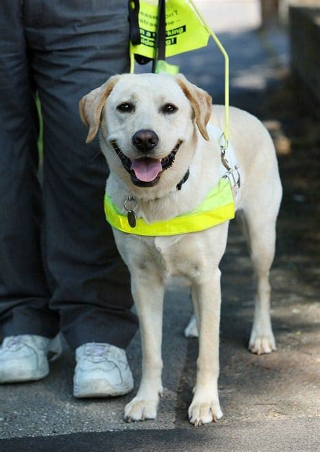 guide dogs help needed for assistance dogs in rental homes citylets