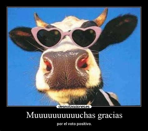 imagenes graciosas vacas muuuuuuuuuuchas gracias desmotivaciones