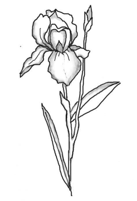 Iris Outline by Iris Digi Drawing Image Iris