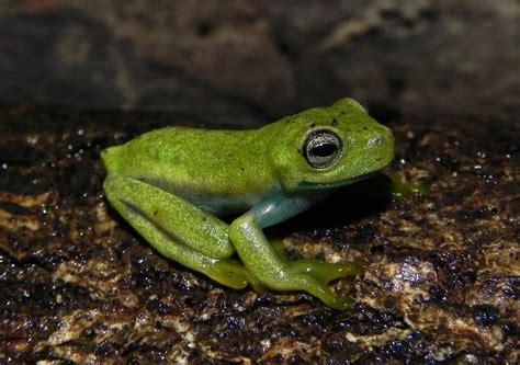 imagenes animales anfibios im 225 genes de animales anf 237 bios imagui
