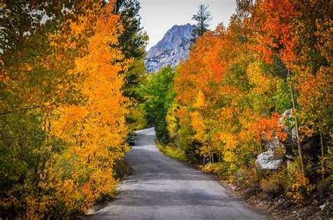 california fall color bishop bursting with fall colors a peek of them at