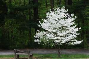 5 best trees to add curb appeal to your home yahoo homes
