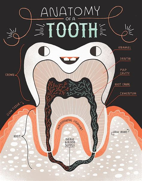 printable dental poster best 25 teeth ideas on pinterest