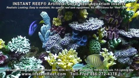 Saltwater Aquarium Decorations by Saltwater Fish Tank Decorations In 120 Gallon Marine Fish