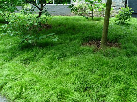 pennsylvania sedge garden housecalls