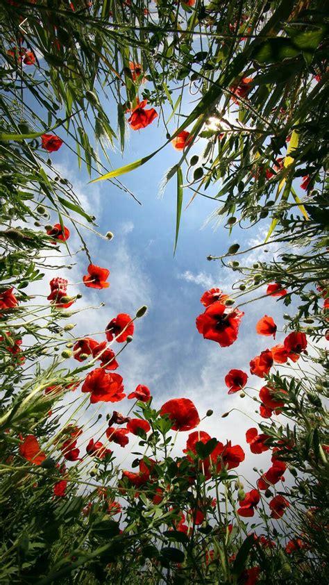 mooie bloemen afbeeldingen mooie afbeeldingen mooie plaatjes pinterest