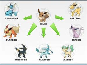 pok 233 biology 101 evolution and the enigma of eevee the jenome