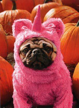 best pug costume 28 best pug costumes images on