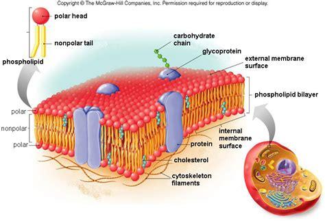 module  part  cell structure