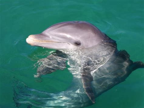secrets the dolphin smile 25 amazing things dolphins do books dolphin smile picture of delfinario en cayo santa