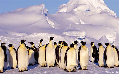 Traveller Pinguin the traveler outdoor photographer