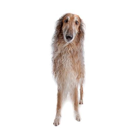 100 pics breeds 100 pics breeds 15 level answer australian