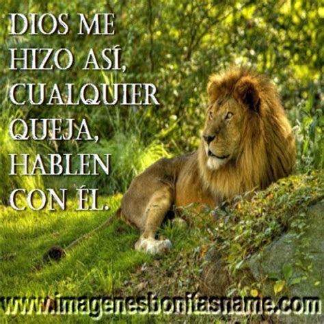 imagenes de leones con frases imagui leon simpatico descansando imagenes bonitas frases bonitas