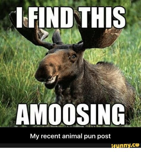 Pun Meme - find this amoosing my recent animal pun post ifunnyco
