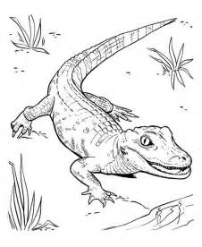 Crocodile Alligator Co Coloring Pages sketch template