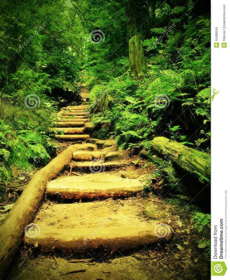 wooden stairs in overgrown forest garden tourist