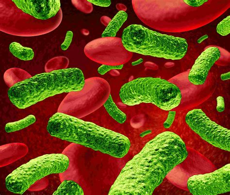 image gallery trachoma bacteria