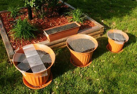vegetables exles 28 exles of container gardening raised 17 best
