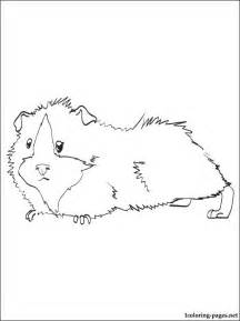 guinea pig coloring pages guinea pig printable and coloring page coloring pages