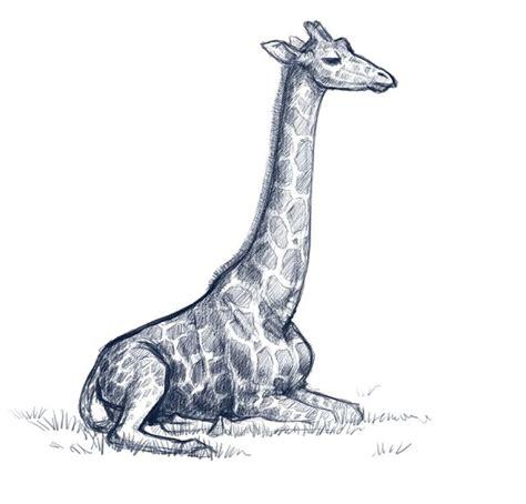 bettdecke zeichnung cotton and giraffe sketches zeichnen kunst und